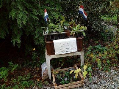 gratis-planten-klein-dantzig